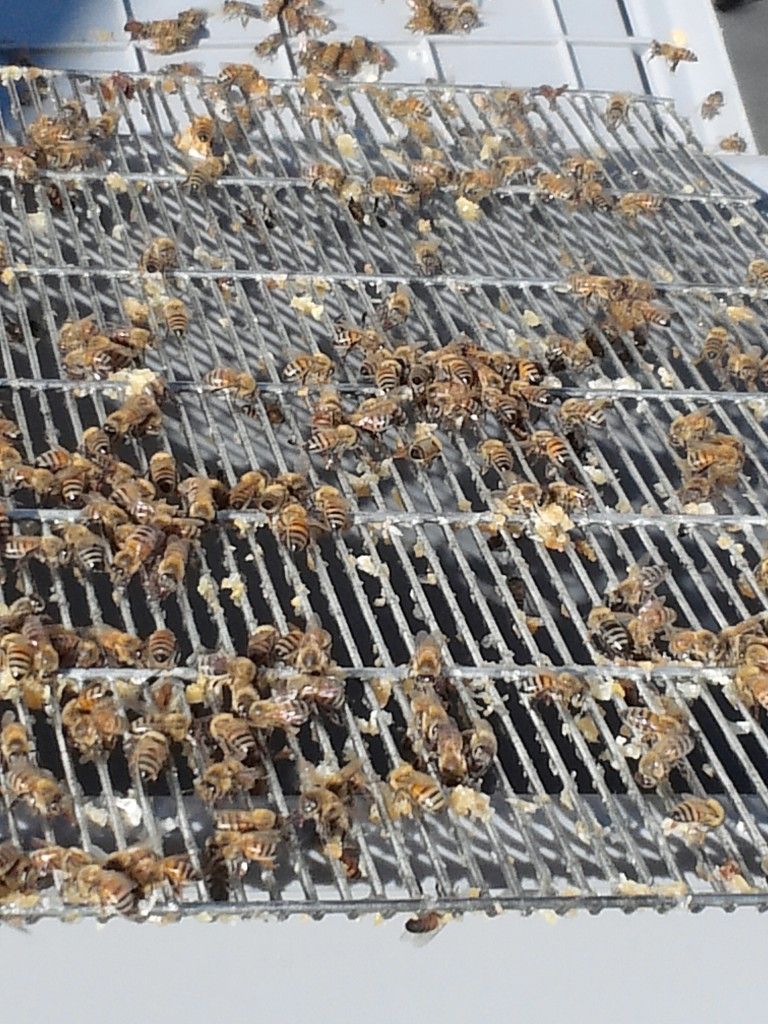 Helper bees on the rack