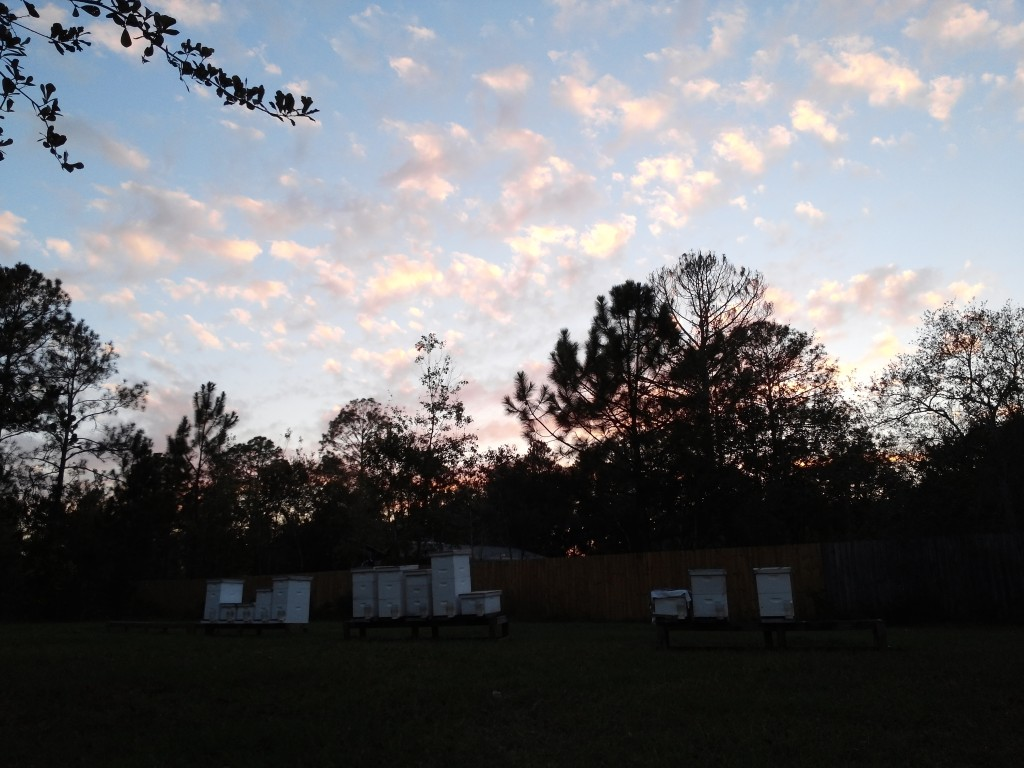 Sunset in the beeyard Dec 8 2015