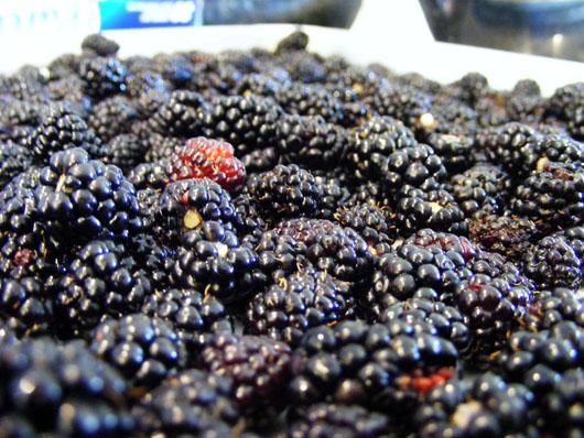Blackberries June 1 2008
